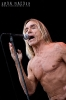 2010-iggy-pop-at-sonisphere_0016-copy